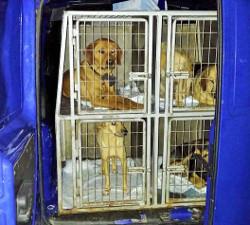 Dubrovnik policijom protiv pasa