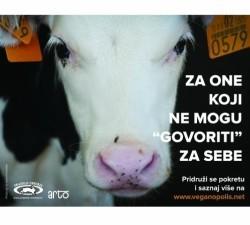plakat krava