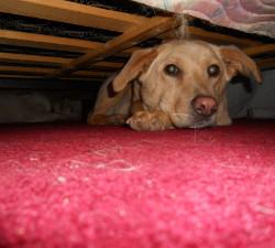 Preplašeni pas