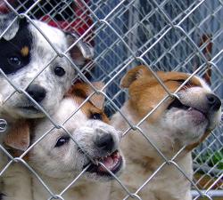 Psi u skloništu