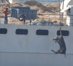Transport živih životinja