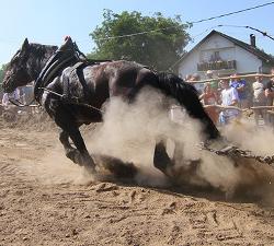 Konj povlaci trupac