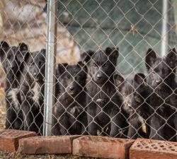 Psi u sklonistu