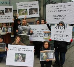prosvjed pred norveskom ambasadom
