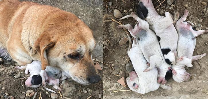 kujica s mrtvim štencima
