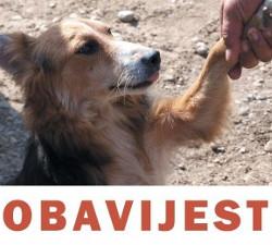 kastracija pasa u romskim naseljima
