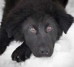 pas na snijegu