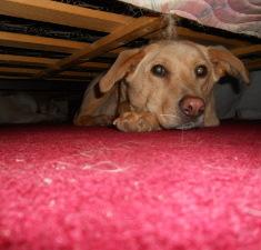 uplašen pas