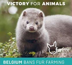 Belgium bans fur farming