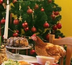 Compassionate Holidays