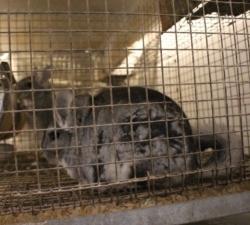Godišnjica Zakona o zaštiti životinja