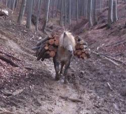 Zlostavljanje konja
