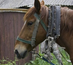 Konji kao robovi