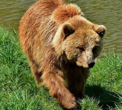Spasimo medvjedića Matiju