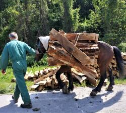 Wood hauling