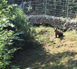 Medvjedić Matija