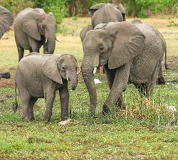 Iskorištavanje slonova